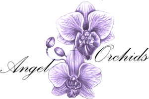 Angel Orchids